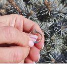 Серебряное кольцо для предложения с бриллиантом